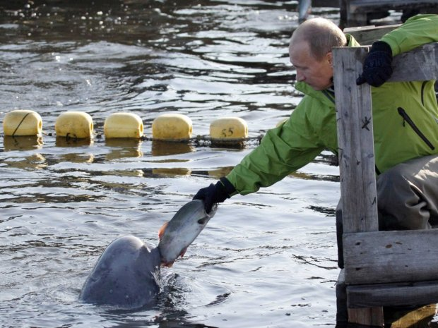 he-also-has-found-ways-to-help-scientists-tag-creatures-without-shooting-them-here-he-feeds-a-beluga-whale-named-dasha