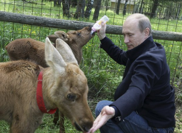 the-russian-president-bottle-feeds-young-elk-at-a-nature-reserve