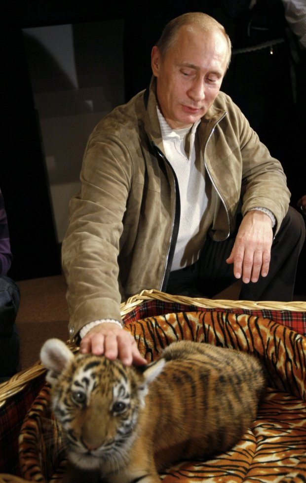 theres-also-a-softer-side-to-the-russian-president-here-putin-strokes-a-two-month-old-tiger-cub-he-received-as-a-birthday-present-at-his-novo-ogaryovo-residence-outside-of-moscow-it-will-soon-go-to-a-zoo